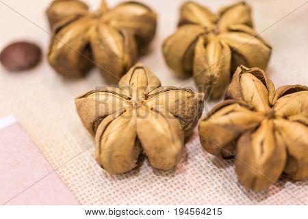 Sacha Inchil, Sacha Peanut, Inca Peanut, Supua Or Mountain Peanut