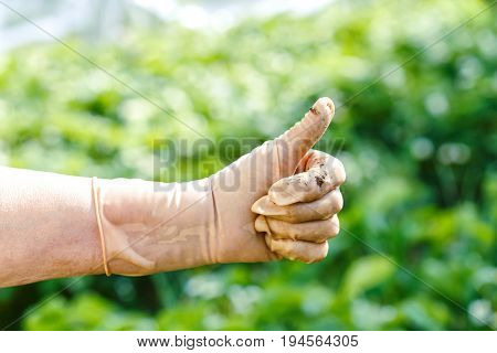 Worker Wearing Leather Work Glove Giving the Thumbs Up Sign. The farmer's hand in working gloves.