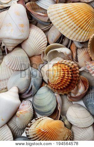 Variety of seashells at sun summer day