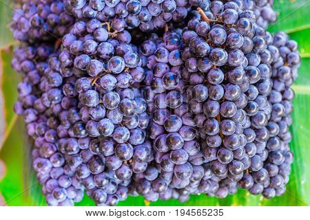 wine grape berry fruit of deciduous woody vines of the botanical