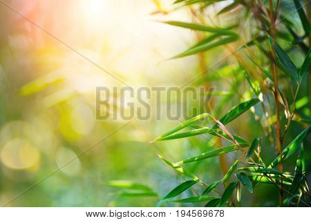 Bamboo. Bamboos Forest. Growing bamboo border design over blurred sunny background. Space for your text