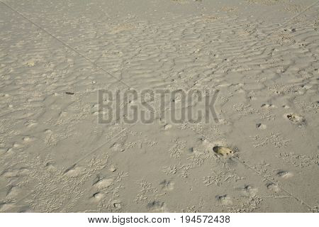 Bird footprints on the beach, footprints background.