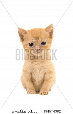 Cute sitting sad looking 4 weeks old red ginger baby cat facing the camera isolated on a white background