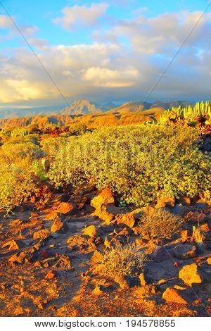 Beautiful view of rocky desert at sundown in Tenerife, Canary Islands