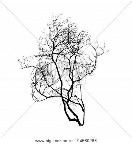 dead tree silhouette isolated on whte background