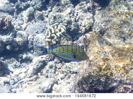 Fishes in corals. Underwater world Underwater landscape in a sunny day