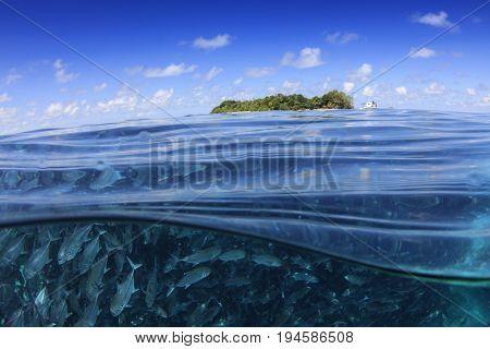 Fish school underwater (trevally or jack fish) and sea surface and Sipadan Island
