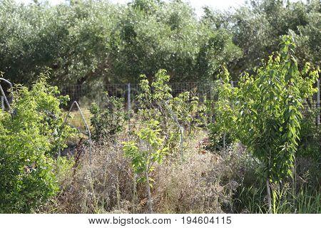 Greek wild garden on sunny day in summer on Zakynthos island.