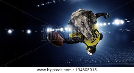 Furious elephants team