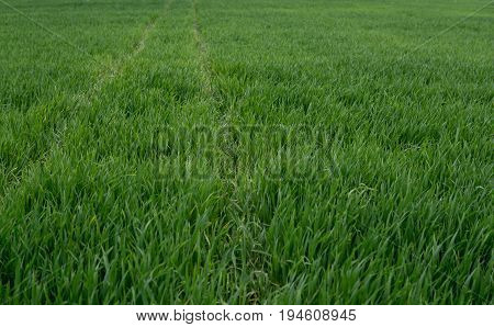 Tracks Of Tractor