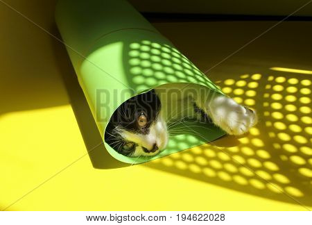Cute black kitten playing with green paper on yellow background.