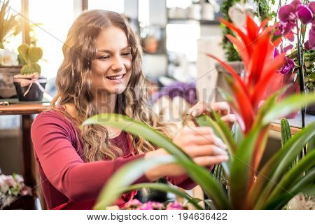 Woman florist taking care of plants in her shop