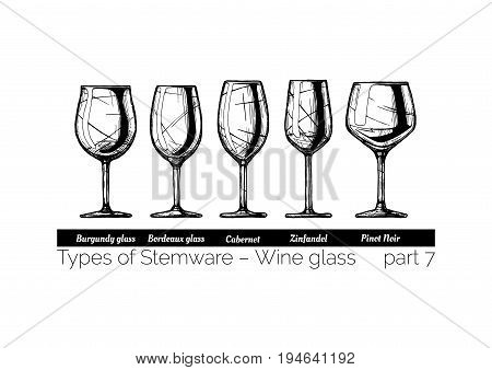 Types of red wine glass. Burgundy Bordeaux Cabernet Zinfandel and Pinot Noir glasses. illustration of stemwares in vintage engraved style. isolated on white background.