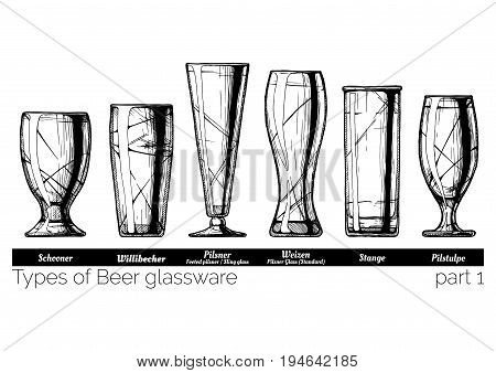 Types of Beer glassware. Schooner willibecher pilsner weizen stange and pilstulpe glasses. illustration of stemwares in vintage engraved style. isolated on white background.