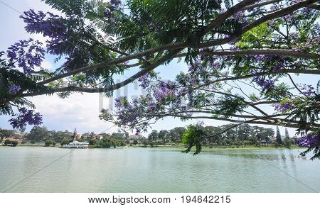 Lake Scenery In Dalat, Vietnam