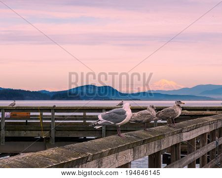 View on Mt. Baker from Sidney Vancouver Island Canada