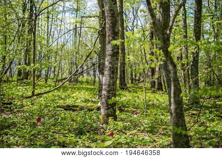 Forest Landscape. Meadow With Flowers And Trees. Selective Focus.