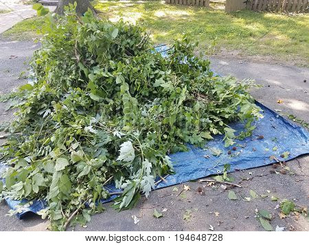 a load of sticks and leaves in a blue tarp