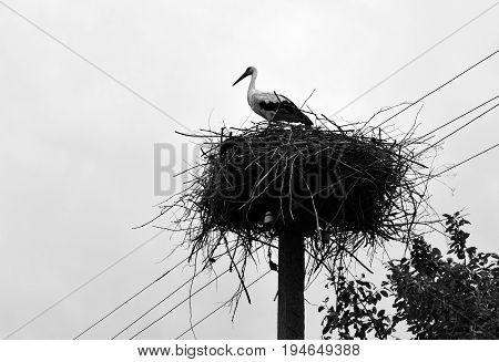 The stork is in a nest. The nest is placed on a column.