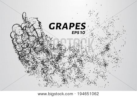 The Grapes Of Particles. Grapes Consists Of Small Circles And Dots. Vector Illustration.