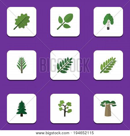 Flat Icon Bio Set Of Leaves, Jungle, Park And Other Vector Objects. Also Includes Baobab, Leaves, Alder Elements.