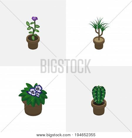 Isometric Houseplant Set Of Peyote, Flowerpot, Houseplant And Other Vector Objects. Also Includes Cactus, Flower, Peyote Elements.
