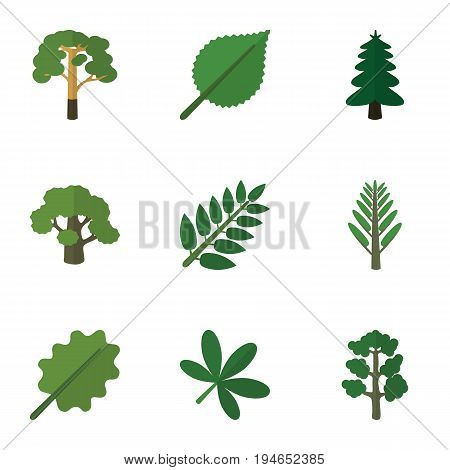 Flat Icon Bio Set Of Wood, Tree, Linden And Other Vector Objects. Also Includes Maple, Willow, Leaf Elements.