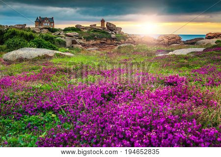 Magical sunset with colorful flowers in Perros-Guirec on Pink Granite Coast Brittany France Europe