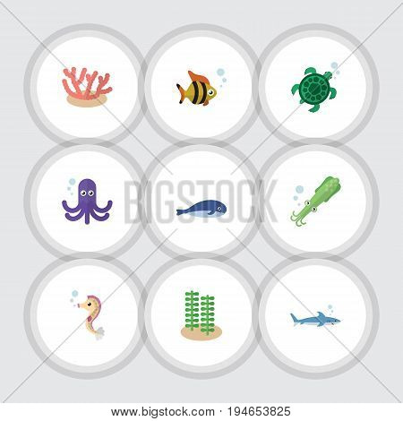 Flat Icon Sea Set Of Octopus, Seaweed, Hippocampus And Other Vector Objects. Also Includes Algae, Squid, Octopus Elements.