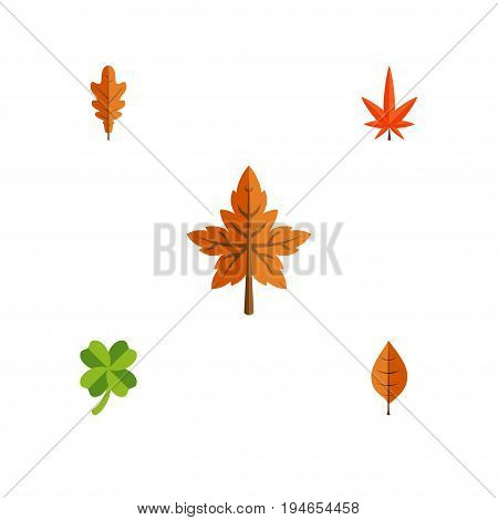 Flat Icon Foliage Set Of Aspen, Alder, Foliage And Other Vector Objects. Also Includes Frond, Hickory, Linden Elements.