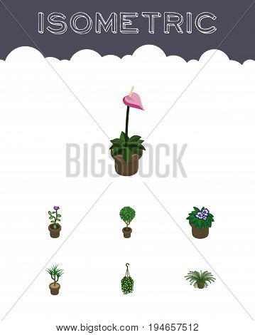 Isometric Flower Set Of Plant, Flowerpot, Grower And Other Vector Objects. Also Includes Botany, Hanging, Blossom Elements.
