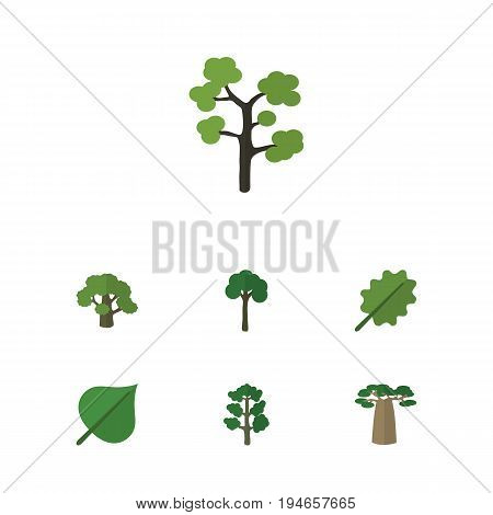Flat Icon Nature Set Of Baobab, Alder, Hickory And Other Vector Objects. Also Includes Hickory, Foliage, Baobab Elements.