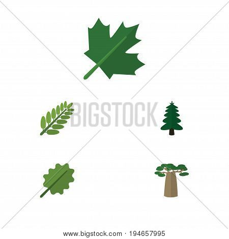 Flat Icon Nature Set Of Baobab, Oaken, Leaves And Other Vector Objects. Also Includes Oak, Acacia, Leaf Elements.