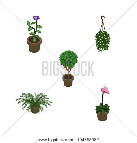 Isometric Houseplant Set Of Tree, Flower, Blossom And Other Vector Objects. Also Includes Blossom, Flowerpot, Fern Elements.