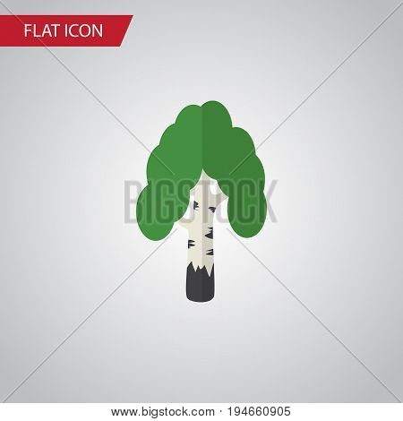 Isolated Birch Flat Icon. Timber Vector Element Can Be Used For Birch, Tree, Forest Design Concept.
