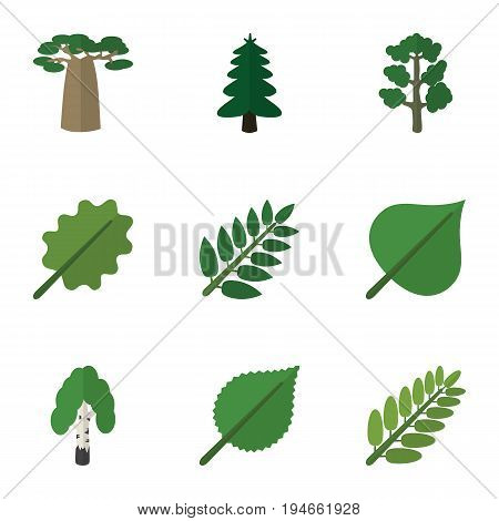 Flat Icon Natural Set Of Leaves, Baobab, Linden And Other Vector Objects. Also Includes Birch, Hickory, Oak Elements.