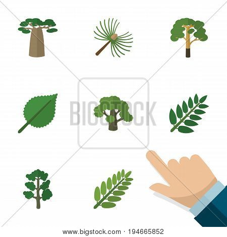 Flat Icon Ecology Set Of Leaves, Linden, Rosemary And Other Vector Objects. Also Includes Baobab, Spruce, Linden Elements.