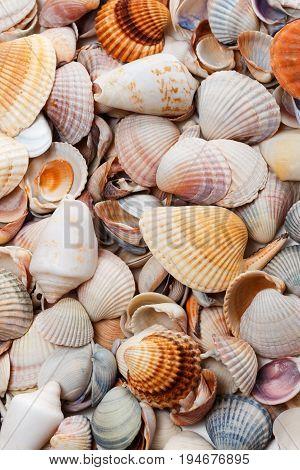 Variety of seashells . Natural background .
