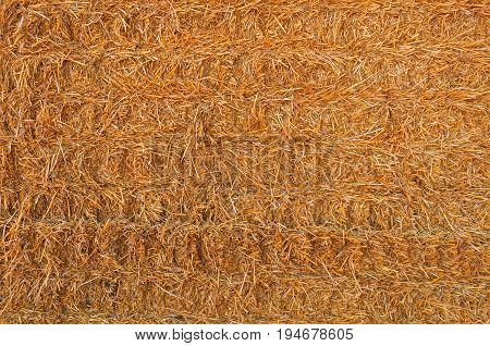 Straw Hay Background with copy space for design