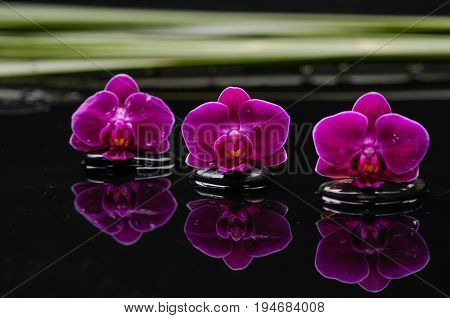 spa concept –three wo red orchid and green leaf
