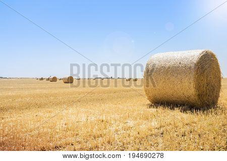 Round Bales Of Straw At The Field, Harvest, Ukraine