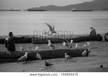 Young man giving dood seagulls black and white