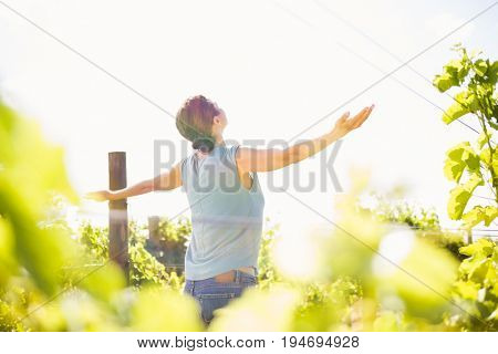 Rear view of woman with arms outstretched standing at vineyard on sunny day