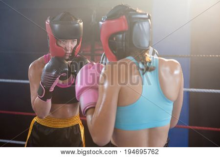Young female boxers wearing protective sportswear in boxing ring