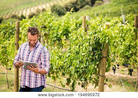Young man using digital tablet and phone at vineyard