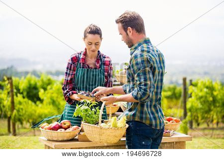 Young man buying organic vegetables from woman standing at farm
