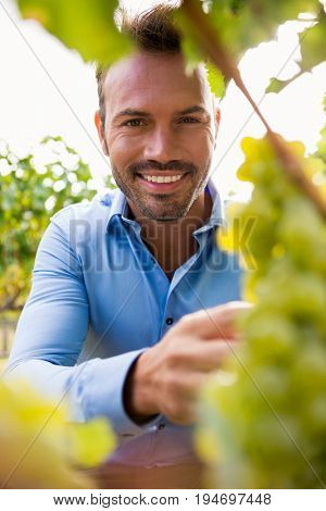 Portrait of smiling young man by grapes at vineyard