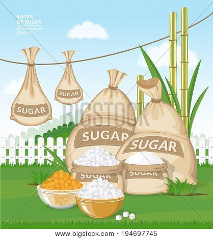 Vector cartoon illustration. Different burlap sacks of sugar in the garden. White and brown sugar cubes in bowls on fresh green grass