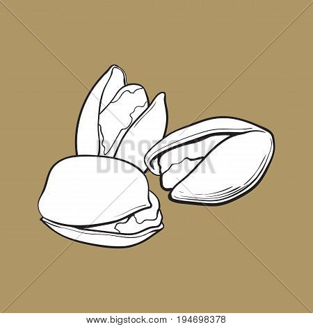 Group of black and white pistachio nuts, shelled and unshelled, sketch style vector illustration isolated on brown background. Realistic hand drawing of pistachio nuts