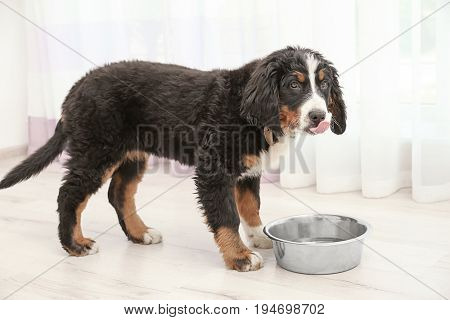 Cute funny dog eating food at home